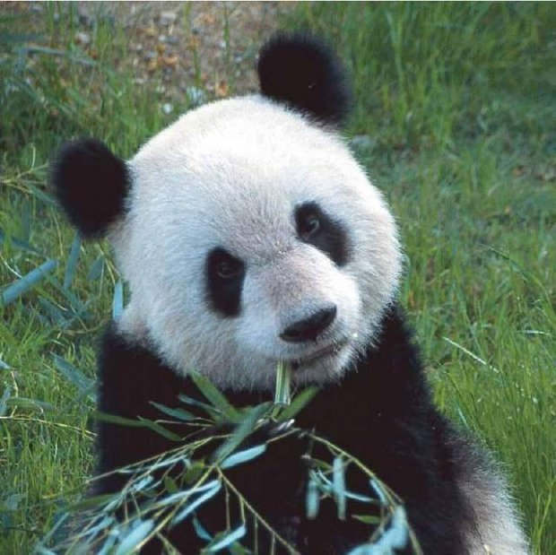 10 бесценных видов, находящихся на грани вымирания